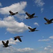 Urlaubsende – die Zugvögel kommen zurück.