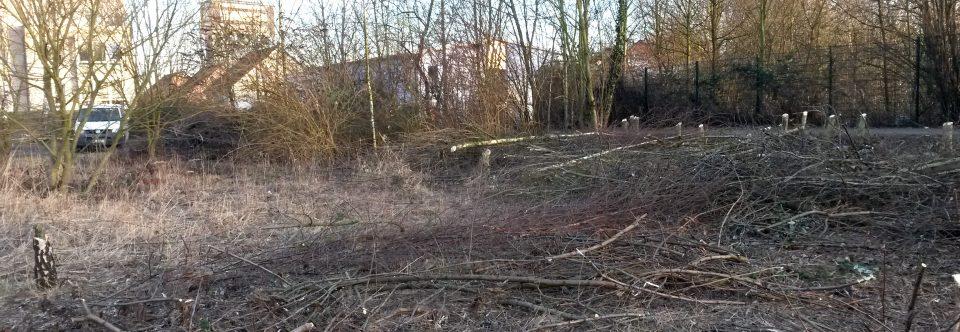 """Bäume weichen dem """"ersten Spatenstich""""! Noch sind Wohnungen zu haben!"""